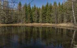 Pond in forest near Karlovy Vary spa. In spring sunny nice day Stock Image