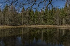Pond in forest near Karlovy Vary spa. In spring sunny nice day Royalty Free Stock Photography