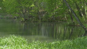Pond in the Forest. stock footage