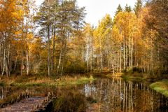 Pond and forest in Tanumshede royalty free stock photos
