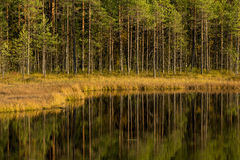 Pond in forest Stock Photography