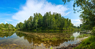 Pond in forest Royalty Free Stock Photo