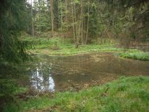 Pond in the forest was made of a beaver stock photos