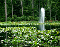 Pond Fountain. A fountain in the distance jets water upwards from a small pond Royalty Free Stock Image