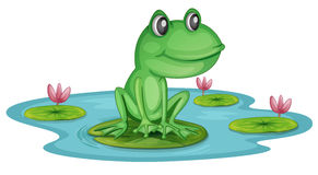 A pond with a frog royalty free illustration