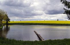Pond in front of a blooming field. Of clouds Royalty Free Stock Images