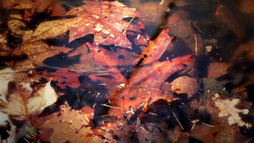 Pond Full of Leaves Royalty Free Stock Photos