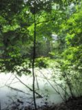 Pond in a Garden. This photo was taken from Meijer Gardens located in Grand Rapids, Michigan. Soft focus royalty free stock photos
