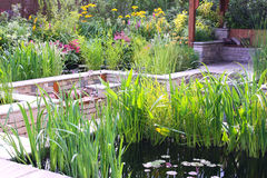 Pond garden Stock Image