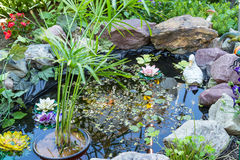 Pond in the garden Royalty Free Stock Photo
