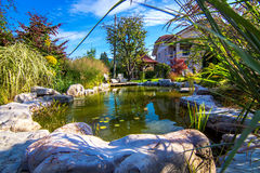 Pond in  garden. Pond in a beautiful creative lush green blooming garden Stock Images