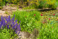 Pond garden Royalty Free Stock Photography
