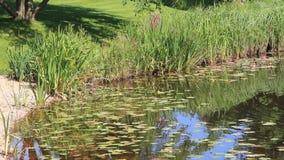 Pond in garden stock video footage