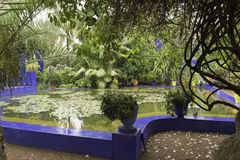Pond in garden majorelle on a rainy day. Jardine Majorelle on a rainy day Royalty Free Stock Photos