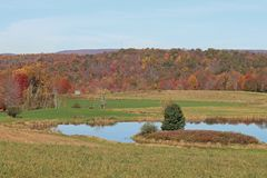 Pond and shed. A pond with geese and a shed with colorful fall trees in the background Stock Photography