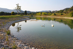 Pond in golf course. Beautiful pond with ducks in golf course stock images