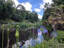 Pond in grand garden setting. Cornwall public garden with pond and arboretum Royalty Free Stock Photo