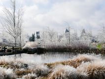 Icy landscape with pond. Pond, grasses and trees covered with ice after freezing rain stock photos