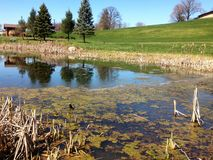 Pond with grassy field and hill Royalty Free Stock Photography