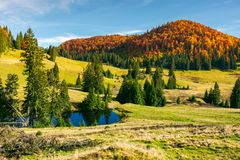 Pond on a grassy meadow among spruce trees. Beautiful autumn landscape with distant mountain in red foliage. bright and warm weather in october Royalty Free Stock Images