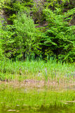 Pond in the green forest Stock Photography