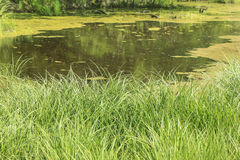 Pond and green grass Stock Photo
