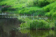 Pond with green grass Royalty Free Stock Photography