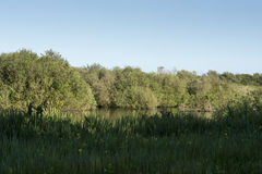 Pond with green grass in wild landscape Stock Image