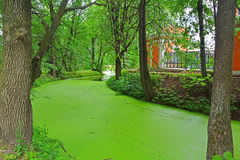 A pond with green ooze in Kuskovo estate in Moscow. In Kuskovo estate - architectural and art ensemble of the 18th century in Moscow city, Russia stock photography