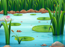 A pond with green plants Royalty Free Stock Photo