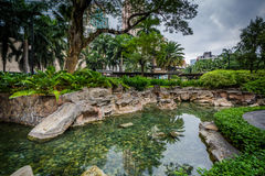 Pond at Greenbelt Park, Makati, Metro Manila, The Philippines. stock photos