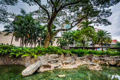 Pond at Greenbelt Park, Makati, Metro Manila, The Philippines. stock photography