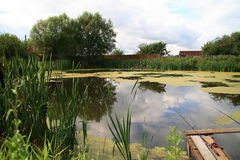 Pond grown with a cane Stock Images