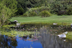 A pond in the Harold Porter Nature Reserve Stock Images