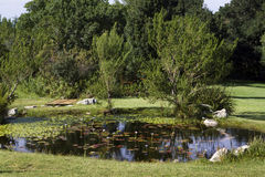 A pond in the Harold Porter Nature Reserve Stock Image