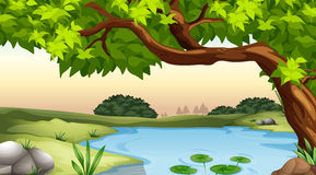 Pond. Illustration of a tree and a pond Stock Images