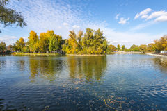 Pond with islands in autumn park Stock Images