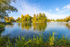 Pond with islands in autumn park Royalty Free Stock Image