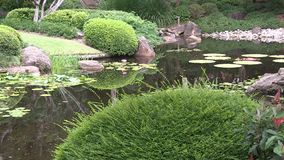 The pond in the Japanese garden at Brisbane Botanic Gardens, Australia. This pond, and the surrounding garden, got built for Japan`s exhibit in the 1988 World stock footage