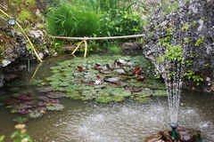 Pond in the Japanese style. Photo of an artificial pond with water lilies and lily grass among the rocks in the background a fountain right in the foreground Royalty Free Stock Photos