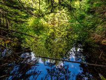 A Pond on Johns Lake Loop in Glacier National Park is a Reflection Pool stock photography