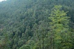 Pond in Jungle Himachal pradesh India
