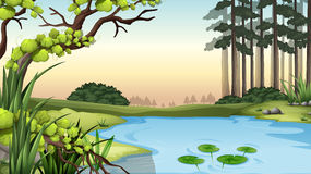 A pond at the jungle. Illustration of a pond at the jungle Stock Photos