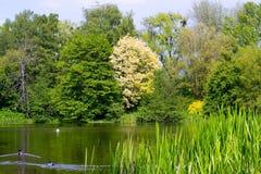 Pond. In Kaliningrad Botanical garden Stock Image