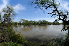 Pond in Keoladeo National Park. View of the pond overgrown trees in tropical forest Keoladeo National Park Stock Photos