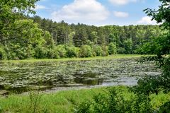 Pond in Kettle Moraine - Eagle Wisconsin. A pond located in the Kettle Moraine in Eagle, Wisconsin, filled with water lilies and lily pads stock images