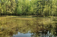 Pond in Kuskovo Royalty Free Stock Photo