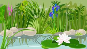 Pond. Landscape with pond and water lily Stock Images