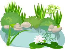 Pond. Landscape with pond and water lily Royalty Free Stock Photography