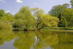 Pond landscape with willows in spring, Germany Royalty Free Stock Images